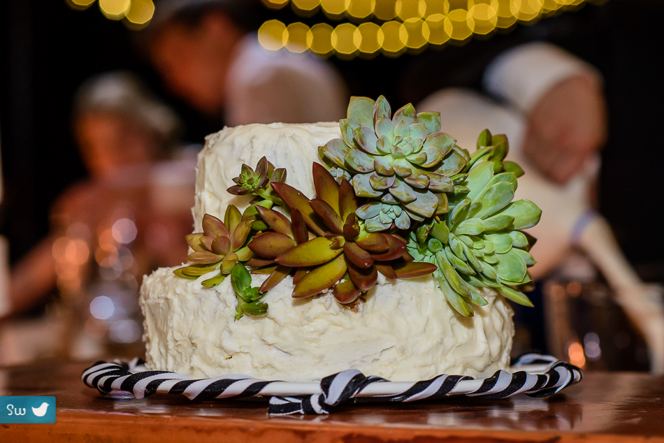 Austin Wedding Photographers reception cake with succulents